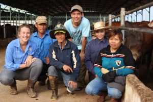 Group of customers in live export cattle destination