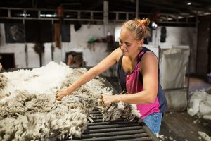 Female wool classer in shearing shed