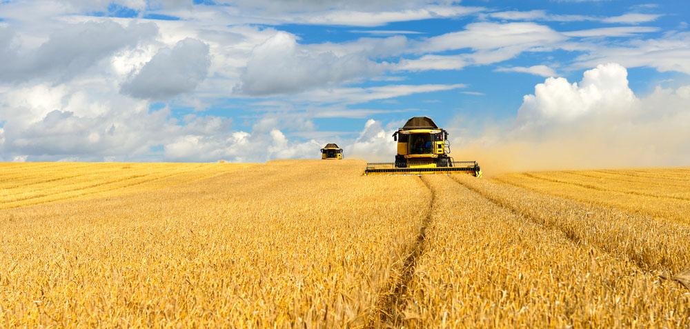 Golden grain harvest