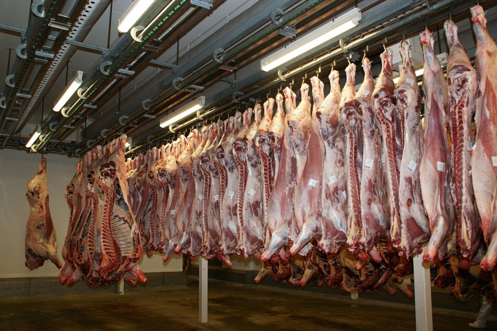 Carcase in meatworks hanging