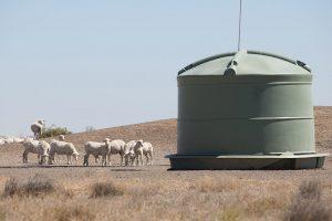 Sheep huddled near a water tank