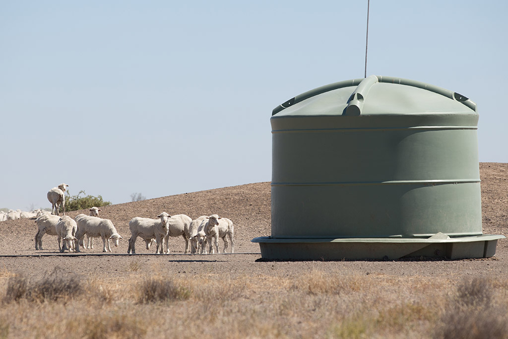 Sheep huddled near a water tank