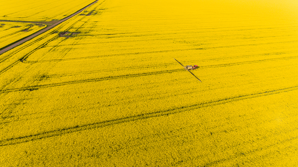 Overhead image of canola field in bloom