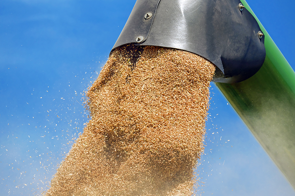 Pouring of grain from above