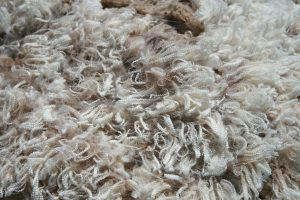 Shorn wool fibres