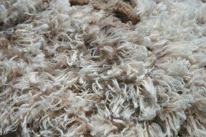 Shorn wool fibres