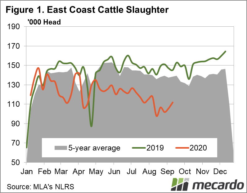 East coast cattle slaughter