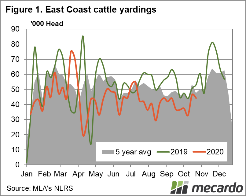 East coast cattle yardings