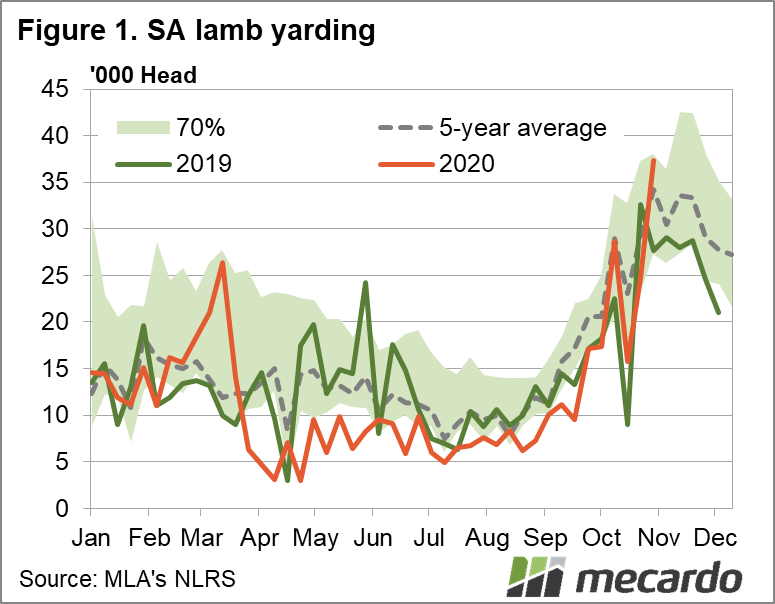 SA lamb yardings