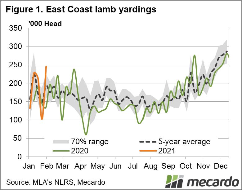 East coast lamb yardings