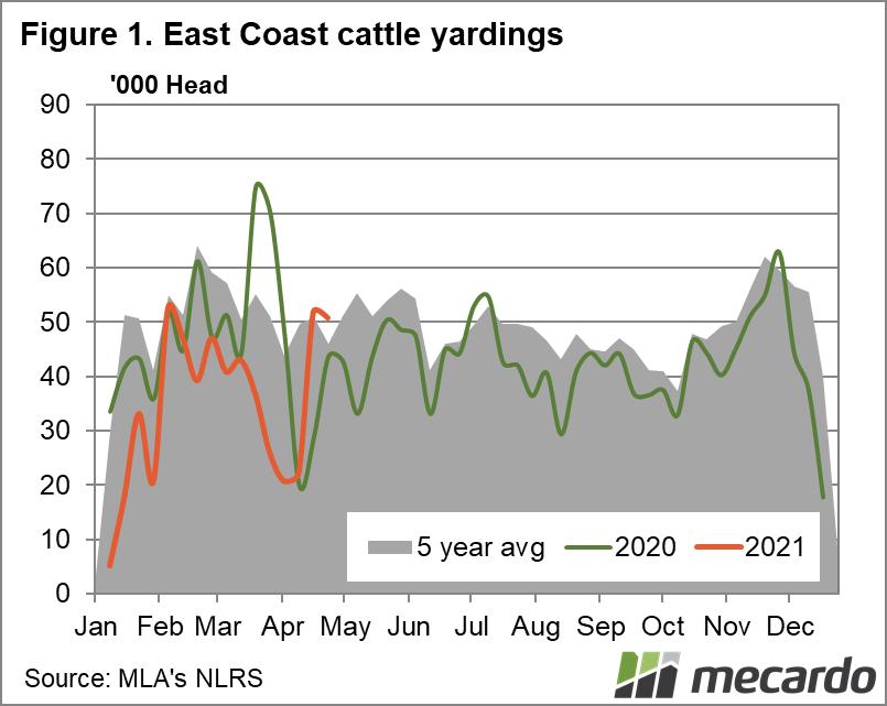 East coast cattle yardings