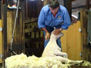 Shearer Australia