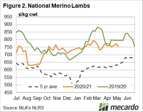 National Merino lambs