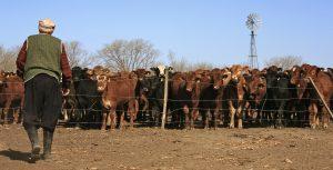 Argentina cattle farm