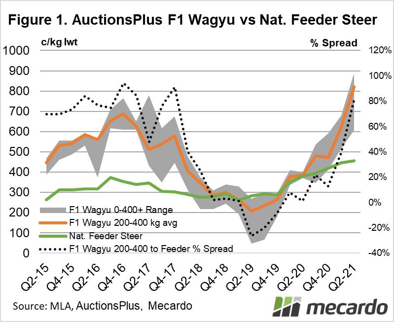 AuctionsPlus F1 Wagyu vs Nat. Feeder Steer