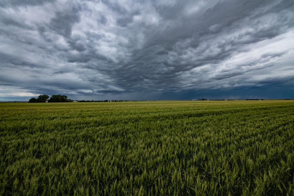 US wheat field rain