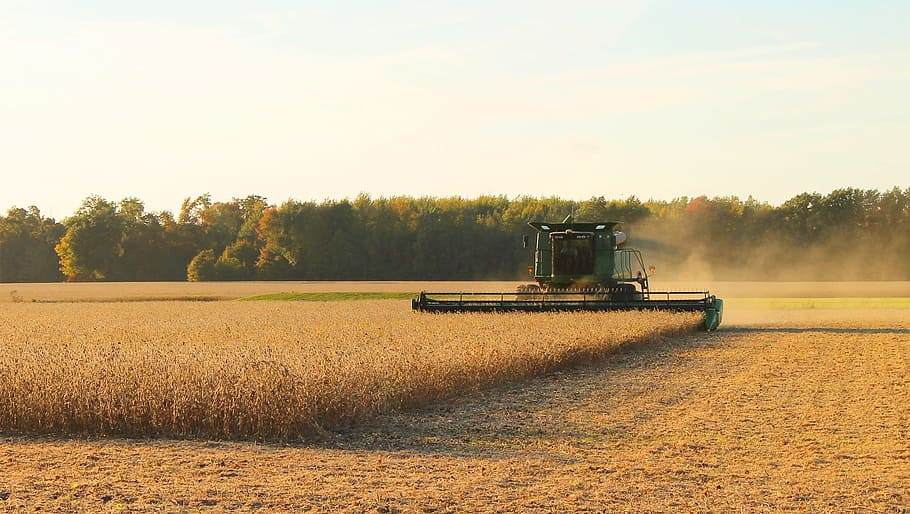 Soybean harvest in the US
