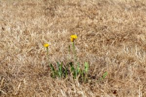 Drought affected field