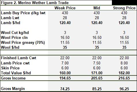 Merino wether lamb trade