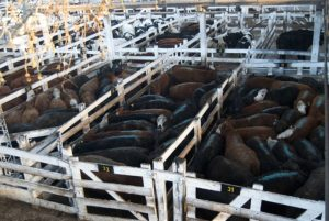 Linears cattle market, Buenos Aires, Argentina