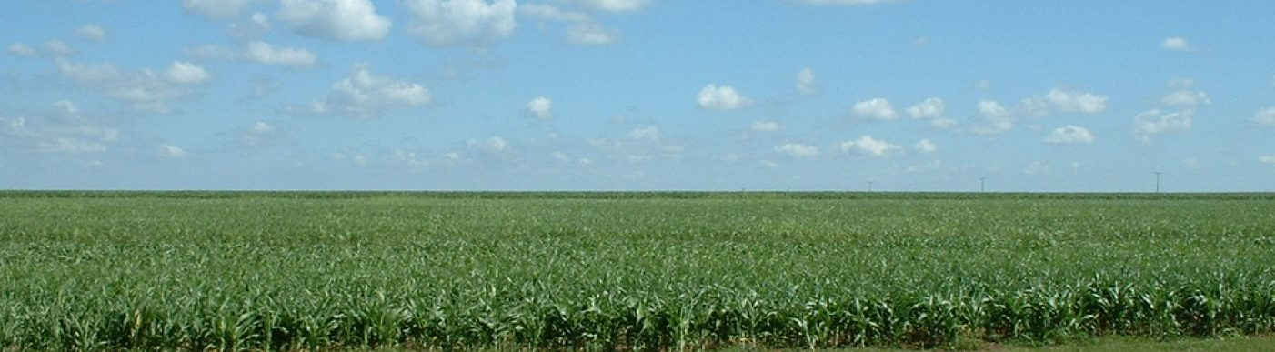 Brazil corn field