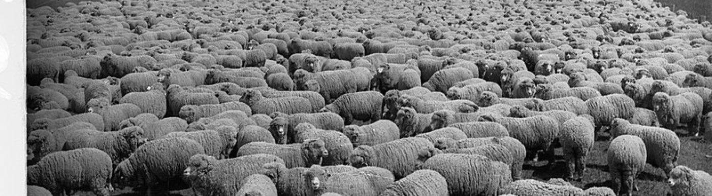 800px-Sheep_Station_at_Bungaree(GN08606)