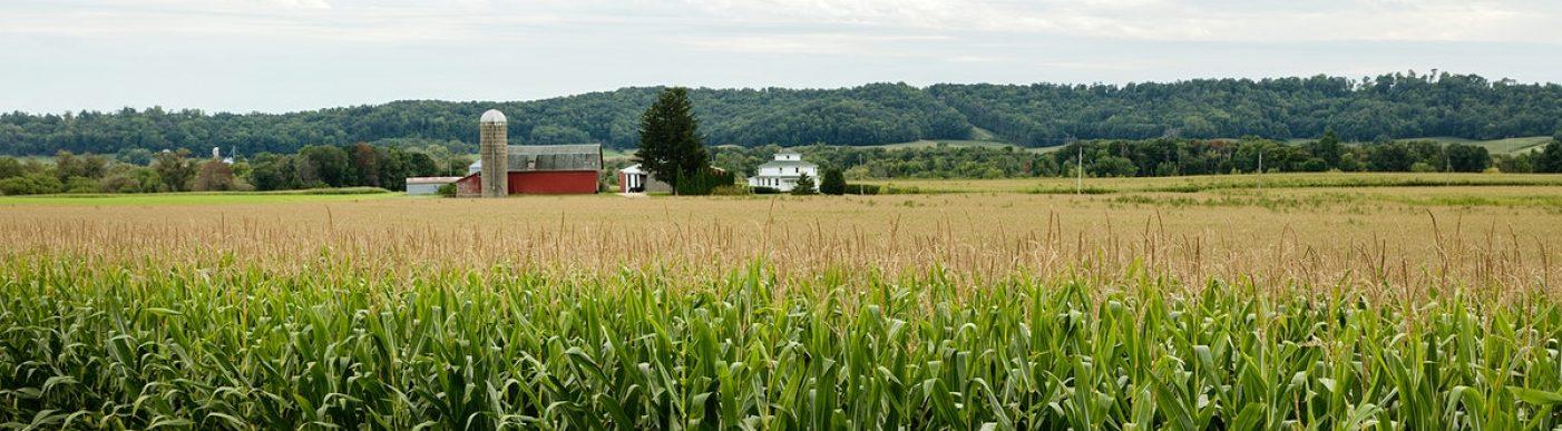 Corn field US