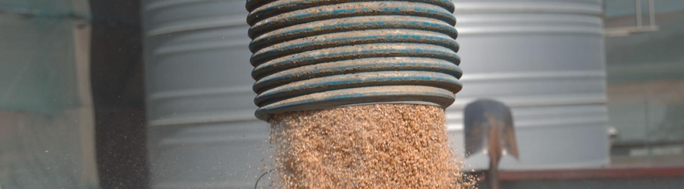 Sorting grain