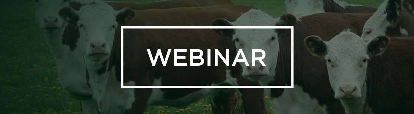 Webinar with image of cattle in the background