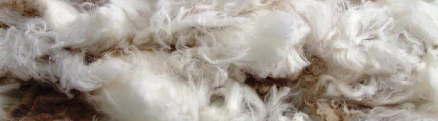 fine wool 14 micron closeup