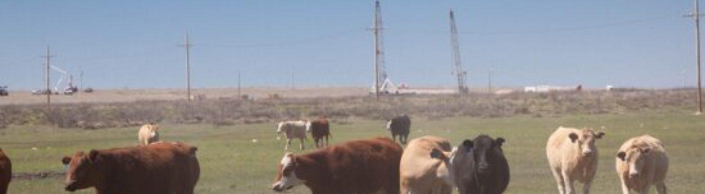 Cattle field