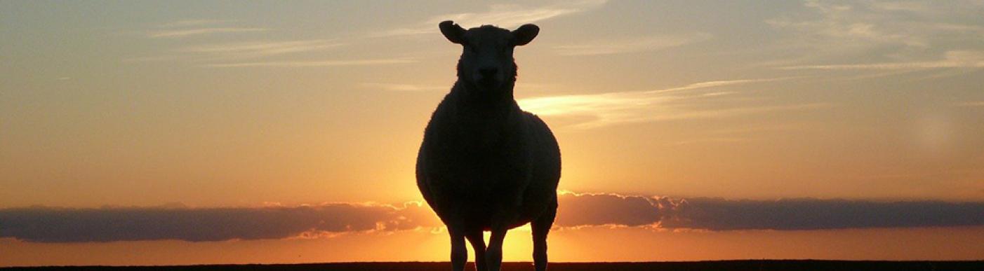 sunset-50494_1280
